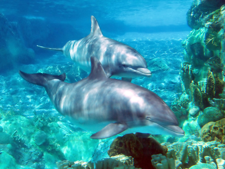Swim with Dolphin Experience